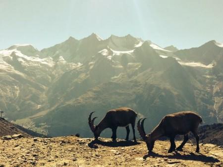 Switzerland Mountaineering Course